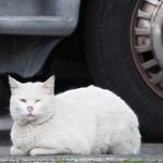 王道の体勢!? 「猫が香箱を作る」という言葉通りの猫写真