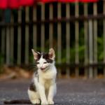 しっとり感がいい! ニコン「D600」で撮る夏の神社仏閣猫