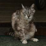 ニコン「D600」と全域F4レンズで猛暑の中の猫を撮る!