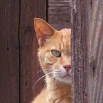 オリンパス「Stylus 1」&「E-M1」で撮る神楽坂の街猫