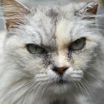 案外ブレない! シグマ「dp2 Quattro」で撮った猫たち