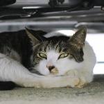 描写力がスゴイ! シグマ「dp2 Quattro」で撮る猫写真