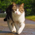 「Nikon 1 V3」や「α6000」で撮る雨上がりの猫