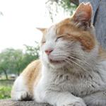 ソニーの高級コンデジ 「RX100M3」で撮る団地の猫