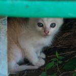 オリンパス「Stylus 1」「XZ-2」などで隠れ猫を撮る!