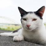 「α6000」や「DSC-RX10」などで撮る、広角猫撮影の魅力