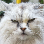 「Nikon 1 V3」で猫の舌が出てる瞬間を狙え!
