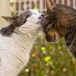 猫のしぐさの定番! でも撮るのは難しい「ペロリの瞬間」