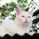 屋根の上でくつろぐ猫をソニー「RX10」で撮る!