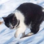 オリンパス「Stylus 1」で撮る雪の上を歩く猫