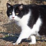 今年もオリンパス「Stylus 1」が最強猫撮りコンデジだ!