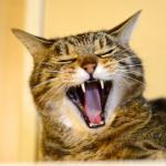 ぼけ感がたまらない!? フルサイズデジカメで撮る猫