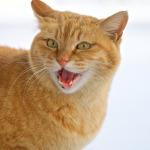 OM-D E-M1で撮る白銀の世界を歩く猫