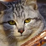 ソニー RX10を手にお正月の鞆の浦で猫撮影【その2】