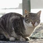 ソニー RX10を手にお正月の鞆の浦で猫撮影【その1】