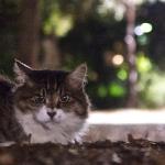 夜の猫を撮るなら明るいレンズのデジカメを!