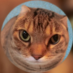 カシオの高画質ハイエンドコンデジ「EX-10」でうちの猫を撮る!