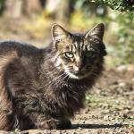 最強の猫撮りコンデジを発見! オリンパス「Stylus 1」