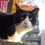 ソニーのレンズだけカメラで自由自在のマルチアングル猫撮り!