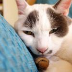 ソニーのレンズだけカメラ「QX100」で猫を撮る!