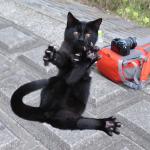 キヤノンの高性能コンデジ「PowerShot S120」と「G16」で撮る猫