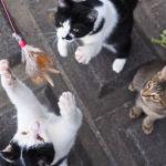 「OM-D E-M1」で撮る3匹の遊ぶ子猫