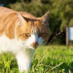 秋空の下でじゃれ合う多摩の猫たち