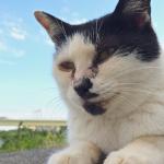 ギリギリまで接近!? iPhone 5sで撮る秋の多摩川猫