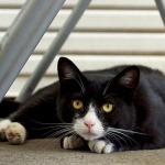 出しそびれた写真をお蔵出し! 2013年夏の猫コレクション