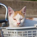 猛暑の漁港で見つけたのどかな風景と猫