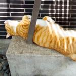 記録的猛暑でいつも以上にバテる猫たち