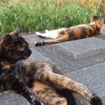 猛暑でも涼しげな姿を求めて! 多摩川の猫たち