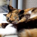 富士フイルムの高級コンデジ「X100S」で撮る猫