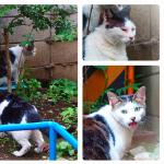 オリンパス「XZ-10」のフォトストーリー猫写真に挑戦!