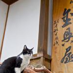 昭和初期の木造旅館と温泉街の猫たち