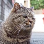 「OM-D」を携えて、猫がいる街「谷中」をぶらり