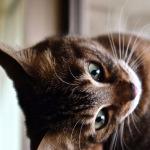 案外難しい!? 雨の日に撮る室内猫