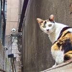 オリンパス「XZ-2」で撮る街の路地裏猫たち