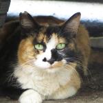 「XZ-10」と「PowerShot N」で撮る大宮の猫たち