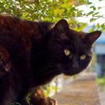 OM-D&PowerShot Nで撮る春の岳南電車猫