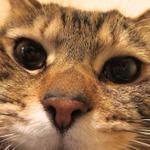 自由な角度で猫を撮れる「PowerShot N」の魅力
