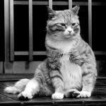 届いたばかりの「PowerShot N」で猫を撮る!