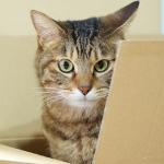 Amazon箱+猫で「ニャマゾン」! 箱入り猫を撮る