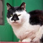 原点に戻ってローアングルで撮影した猫たち