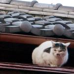 OM-Dと望遠レンズで狙う屋根の上の猫