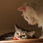暗い室内で遊びまわる猫たちをOM-Dで撮る