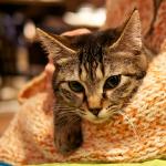 被災地で保護された猫が暮らす浅草の猫カフェ