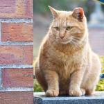 チルト式モニタートリオでペア(っぽい)猫たちを撮る!