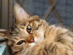 猫をより深く知りたいなら色と模様を覚えるべし!