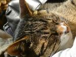 ニコン「D600」とスマホアプリで撮る膝の上の猫
